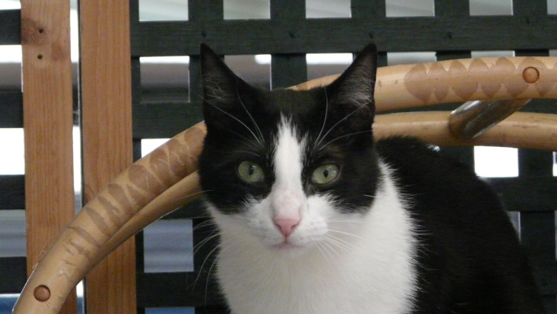 Urgence adoption pour une trentaine de chats P1300022