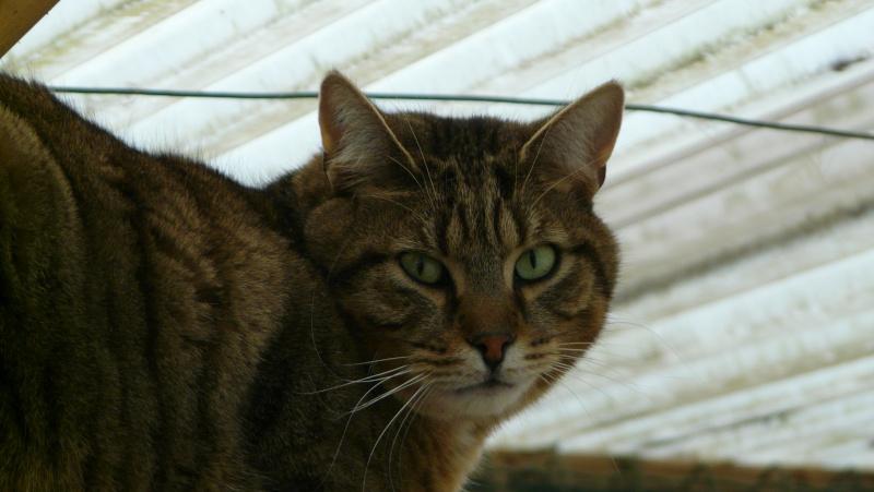 Urgence adoption pour une trentaine de chats P1300023