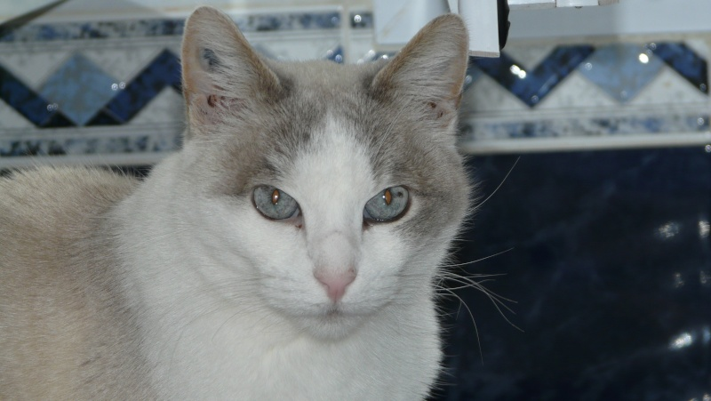Urgence adoption pour une trentaine de chats P1300024