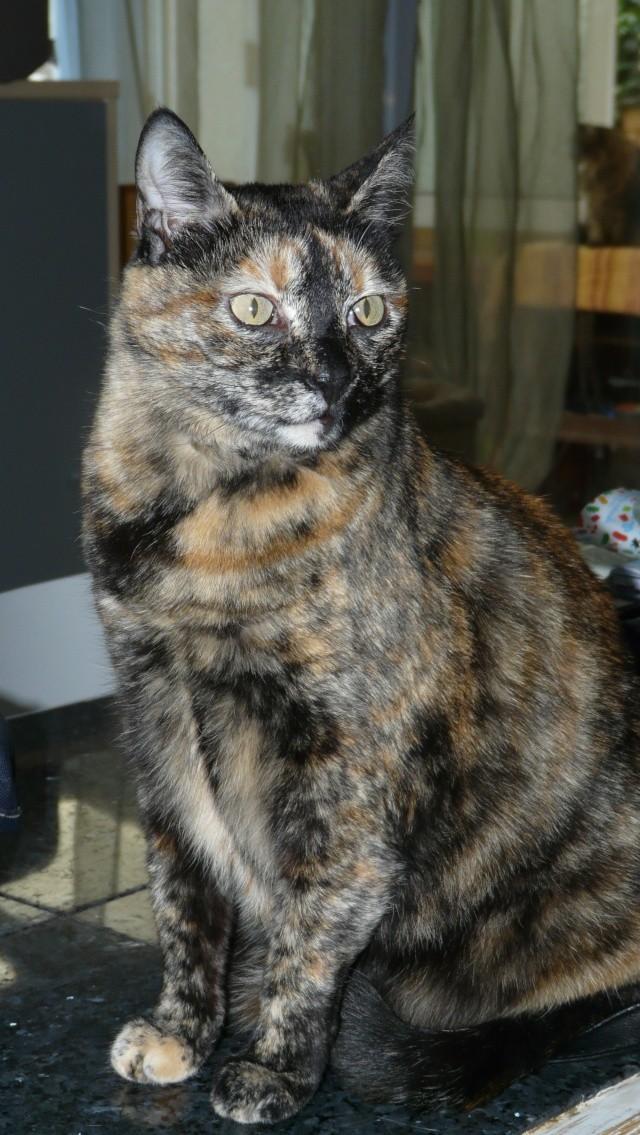 Urgence adoption pour une trentaine de chats P1300025