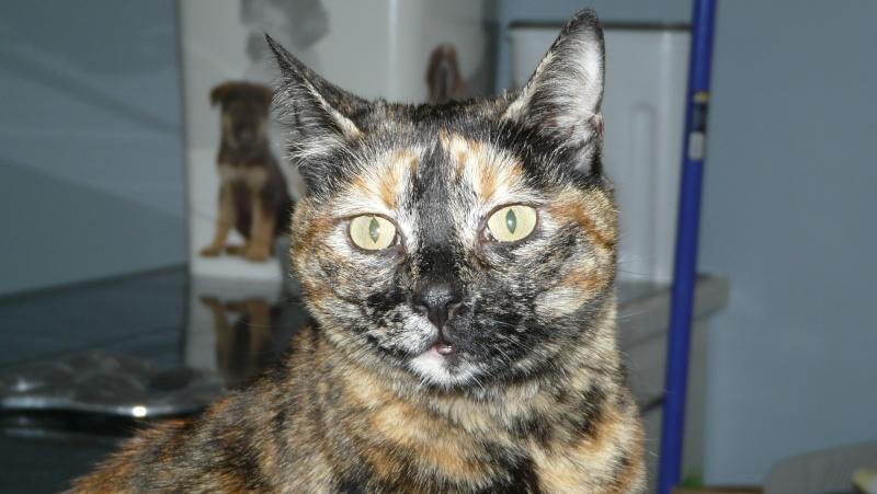 Urgence adoption pour une trentaine de chats P1300026