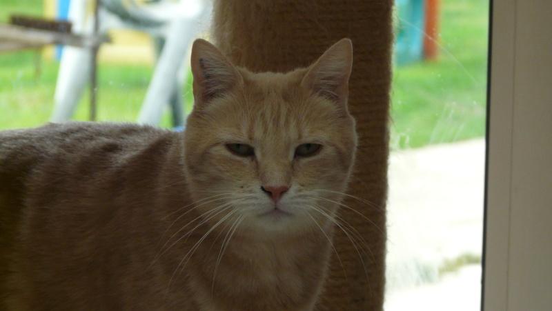 Urgence adoption pour une trentaine de chats P1300027
