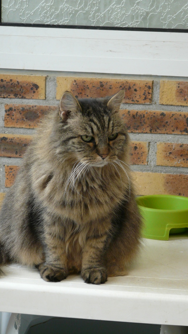 Urgence adoption pour une trentaine de chats P1300110