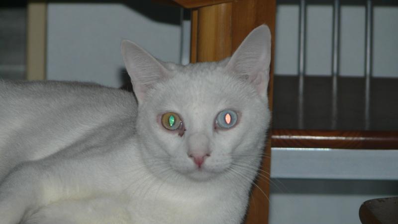 Urgence adoption pour une trentaine de chats P1300111