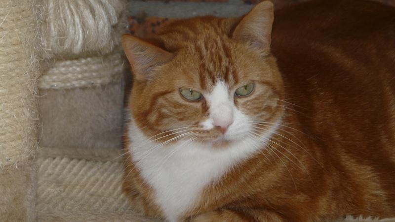 Urgence adoption pour une trentaine de chats P1300112