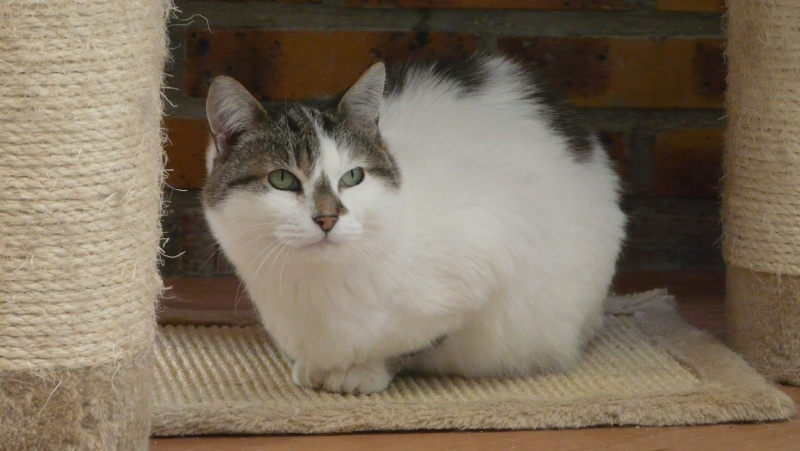 Urgence adoption pour une trentaine de chats P1300113
