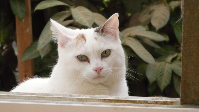 Urgence adoption pour une trentaine de chats P1300114