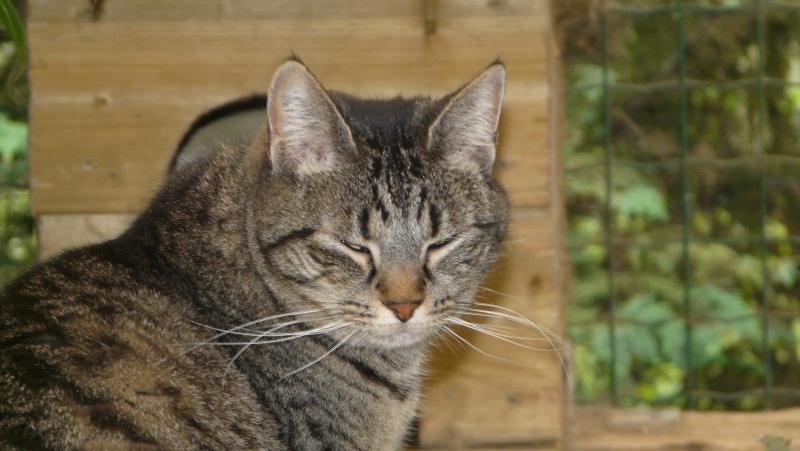 Urgence adoption pour une trentaine de chats P1300115