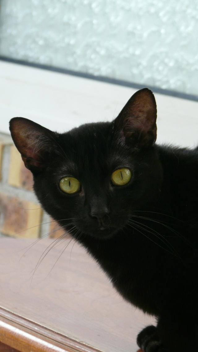 Urgence adoption pour une trentaine de chats P1300116