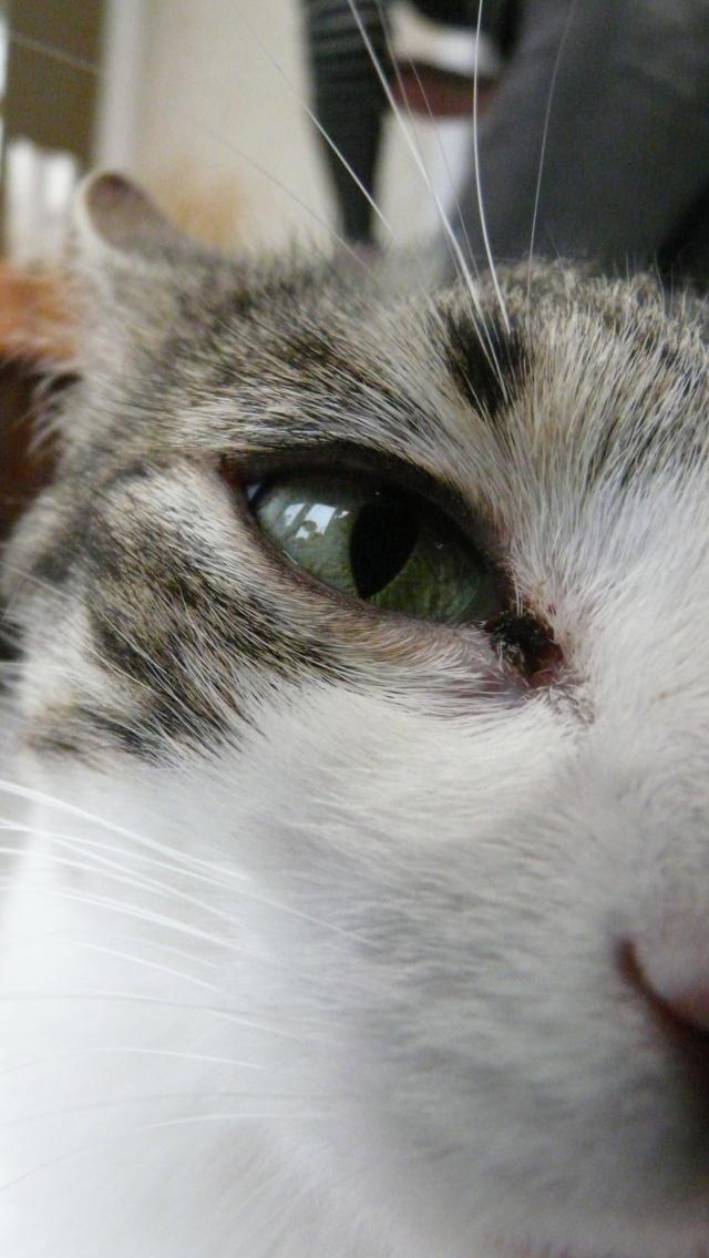 Urgence adoption pour une trentaine de chats P1300117