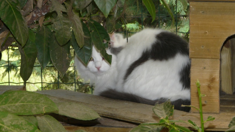Urgence adoption pour une trentaine de chats P1300119