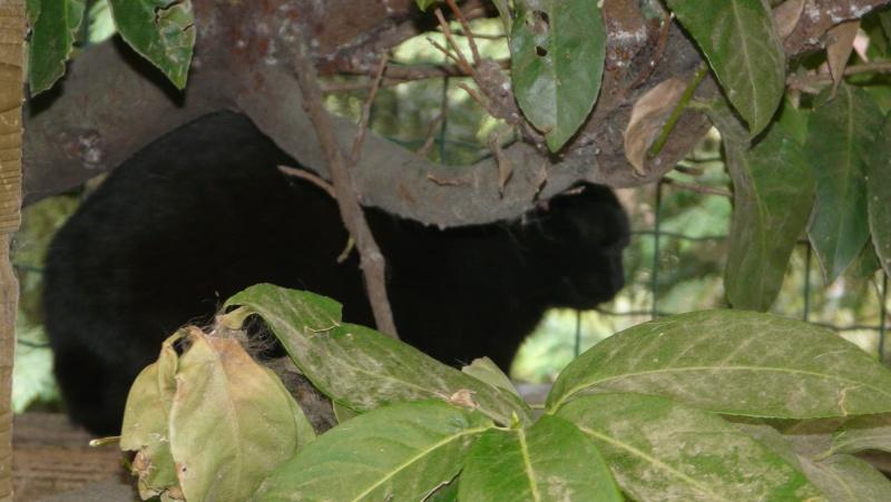 Urgence adoption pour une trentaine de chats P1300120