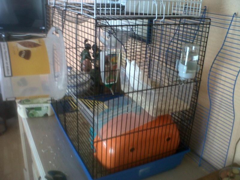 Ca ressemble déjà plus à un cage pour rats ! 110