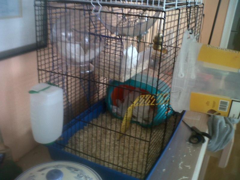 Ca ressemble déjà plus à un cage pour rats ! 210