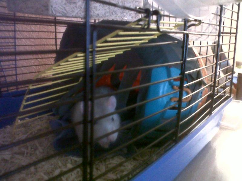 Ca ressemble déjà plus à un cage pour rats ! 310