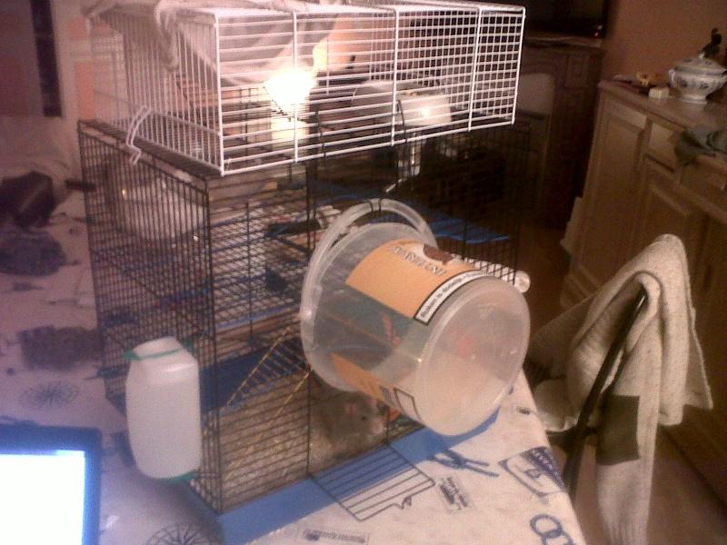 Ca ressemble déjà plus à un cage pour rats ! Img00312