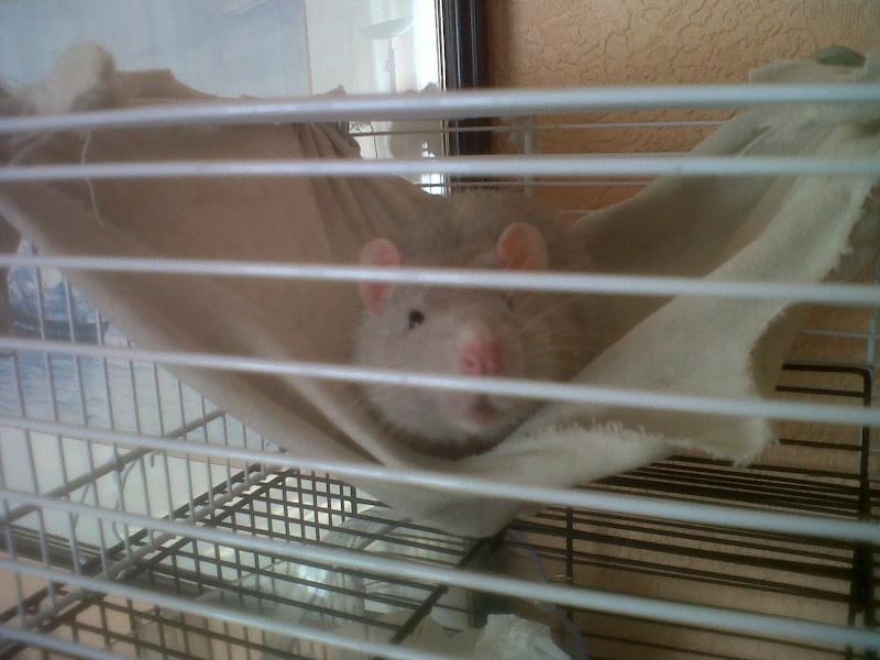 Ca ressemble déjà plus à un cage pour rats ! Img00313
