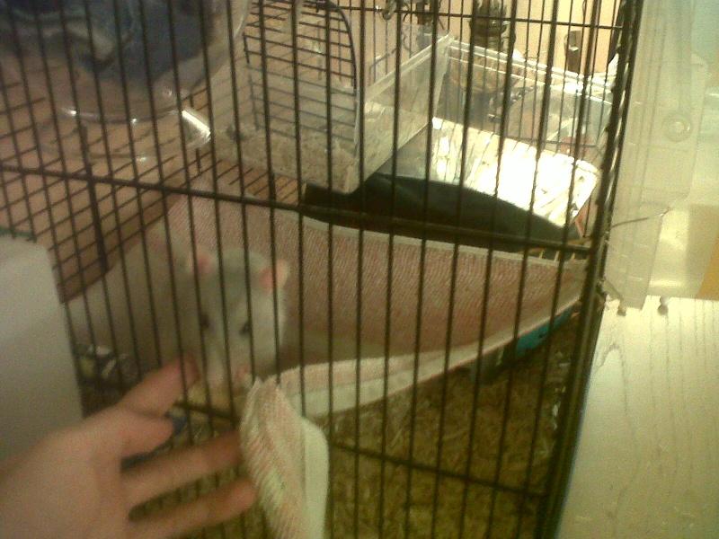 Ca ressemble déjà plus à un cage pour rats ! Img00314