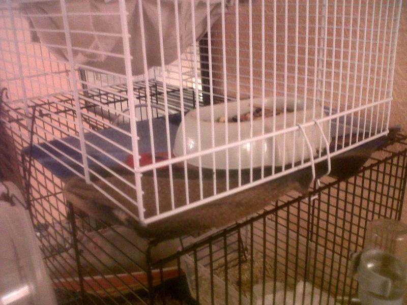 Ca ressemble déjà plus à un cage pour rats ! Img00315