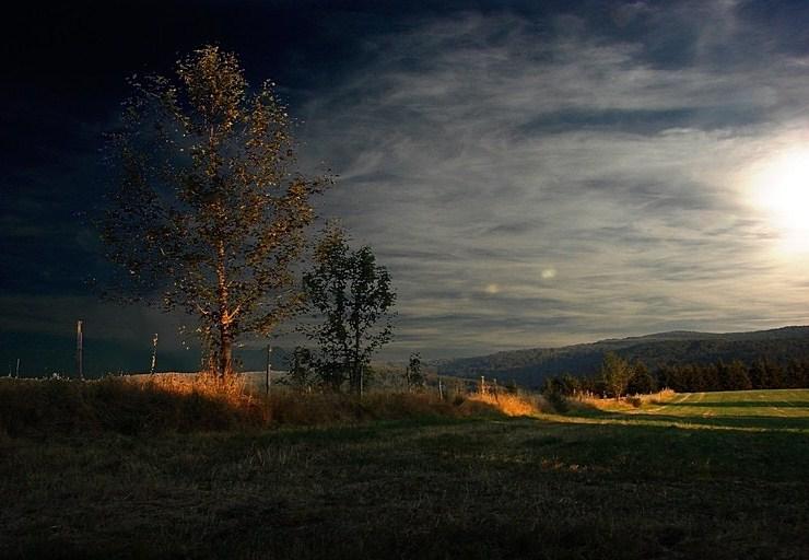 Lumières du soir Arbre_11