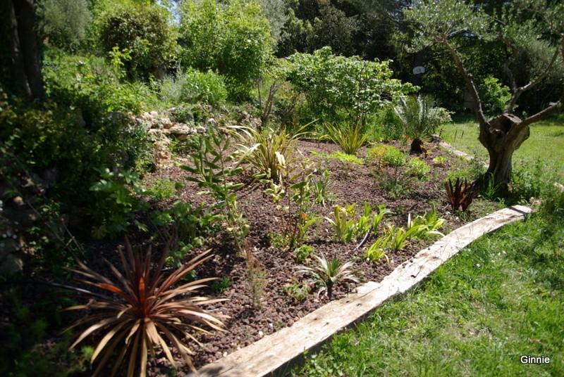 Quelques photos de mon jardin : gros projet 2013 : Evolution Mai 2014 - Page 5 Imgp5822