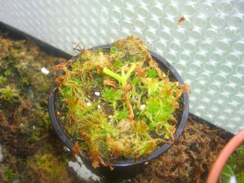 Mes petites plantes Cimg6518