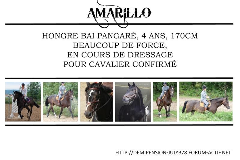 Demi-pension sur chevaux de proprio dans le78 - Portail Amaril10