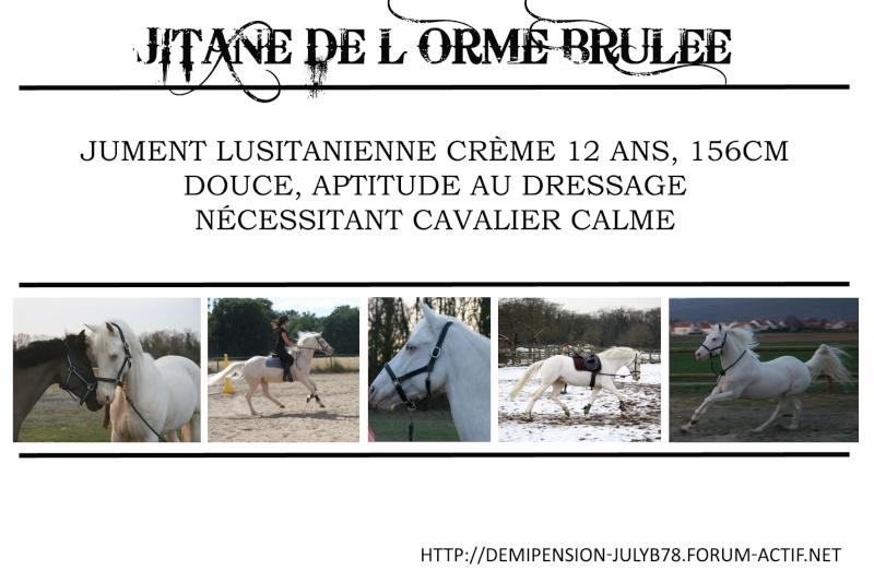 Demi-pension sur chevaux de proprio dans le78 - Portail Jitane11