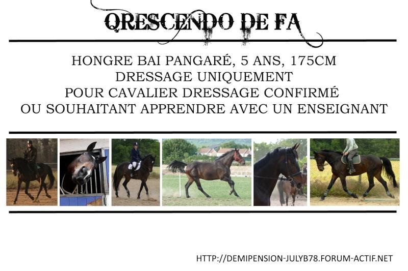 Demi-pension sur chevaux de proprio dans le78 - Portail Qresce10
