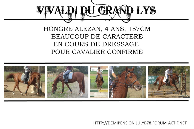 Demi-pension sur chevaux de proprio dans le78 - Portail Vivald10