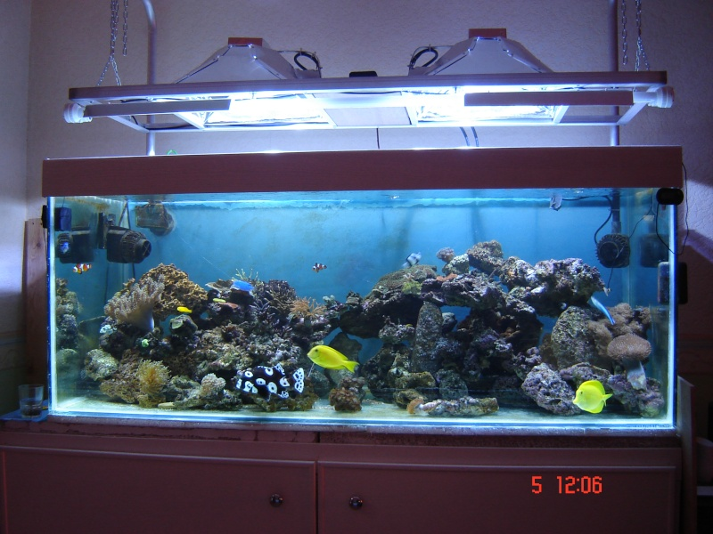 585L fish only de nono49 05_09_10