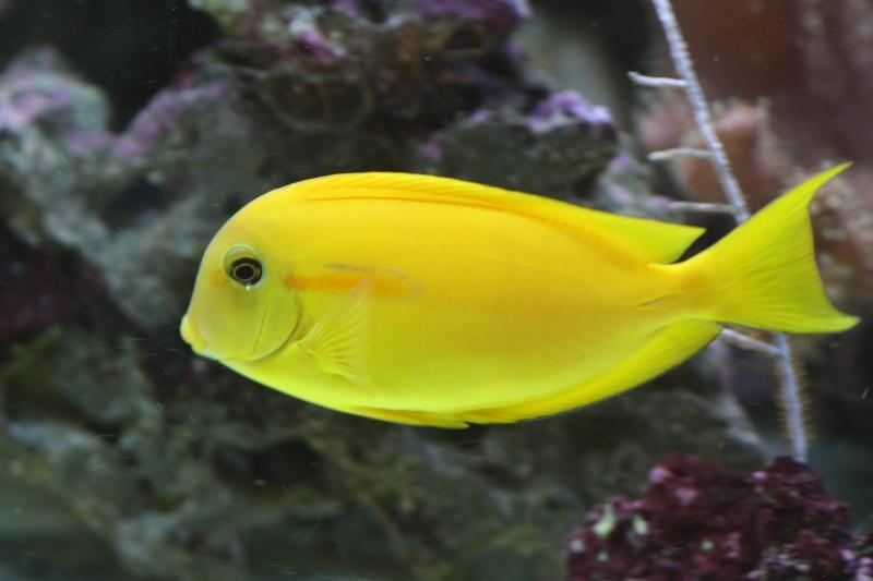 585L fish only de nono49 Img_0115