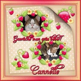 Les tis zoziaux de Cannelle!! Signat13