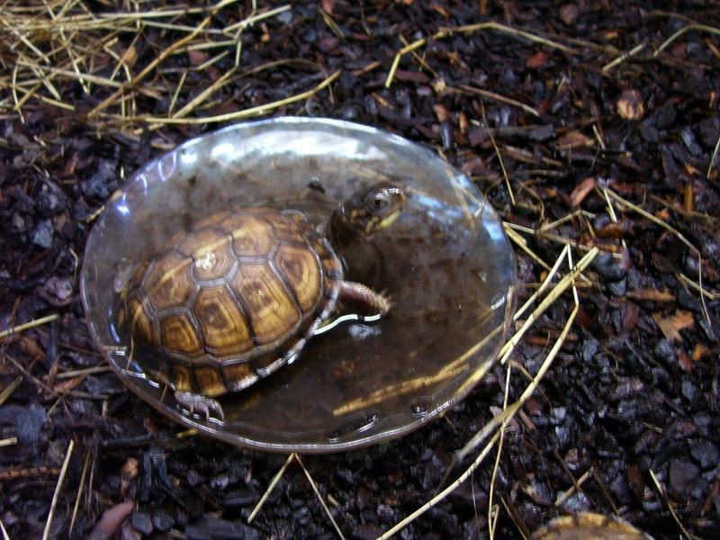 Quelque photos de tortues 100_0910