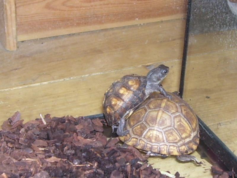 Quelque photos de tortues 100_0917