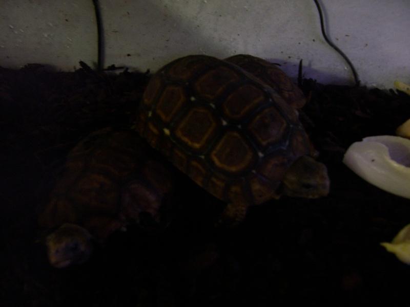 Quelque photos de tortues 100_0925