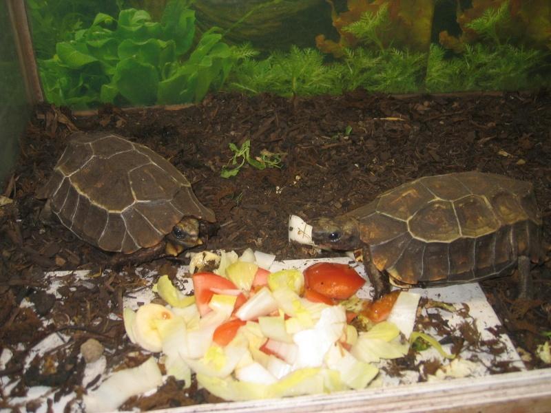 Quelque photos de tortues Kinixy10