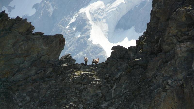 Juin 2009 - Un petit road trip aux 2 Alpes P1050313