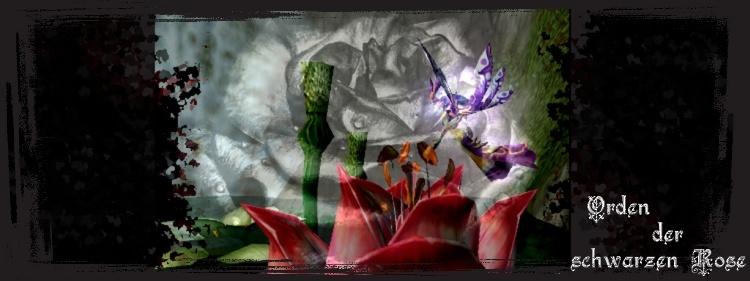 Orden der schwarzen Rose