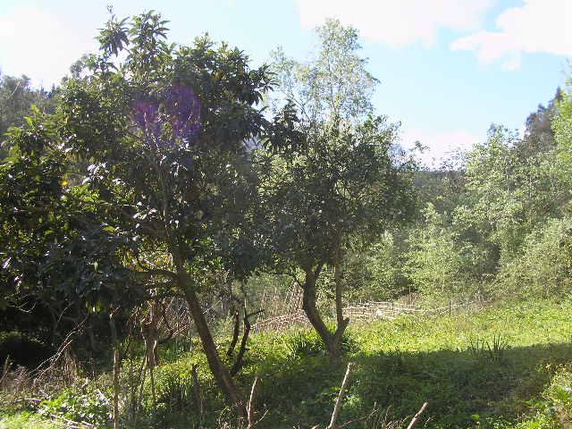 Aokas et ses villages P1010043