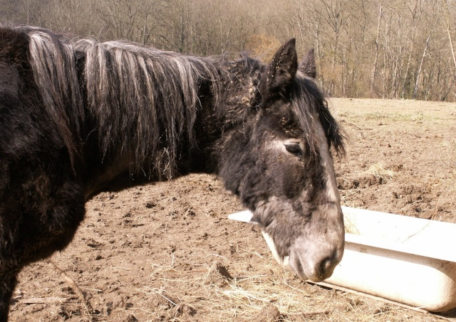 Lise, percheronne 18 mois très maigre arrivée à l'asso Pict3321