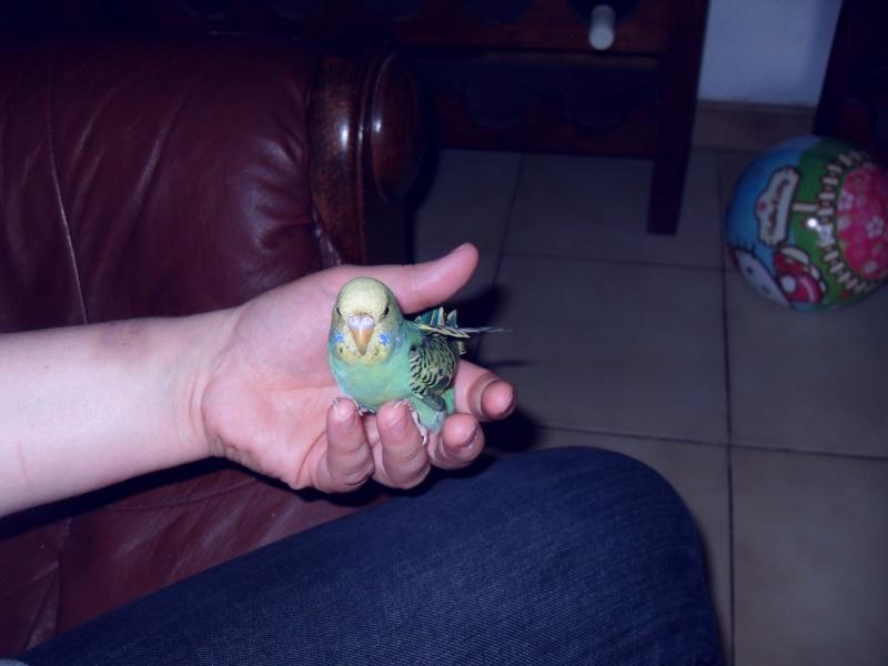 Green... mâle ou femelle?  Sdc10010