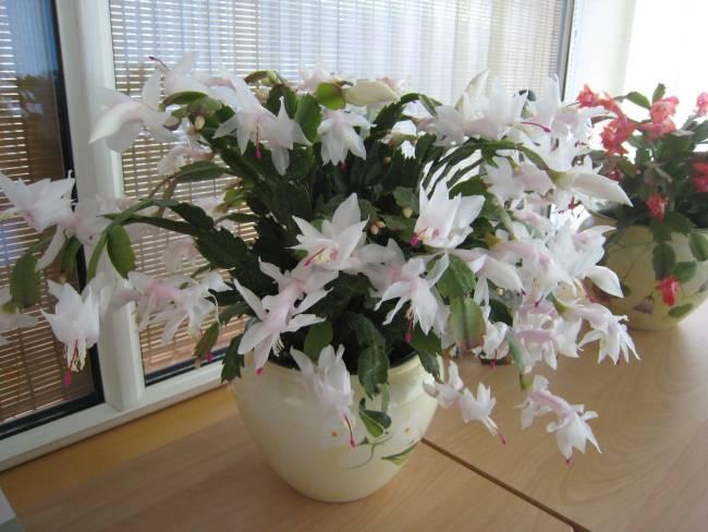 Mes plantes grasses Img_8814