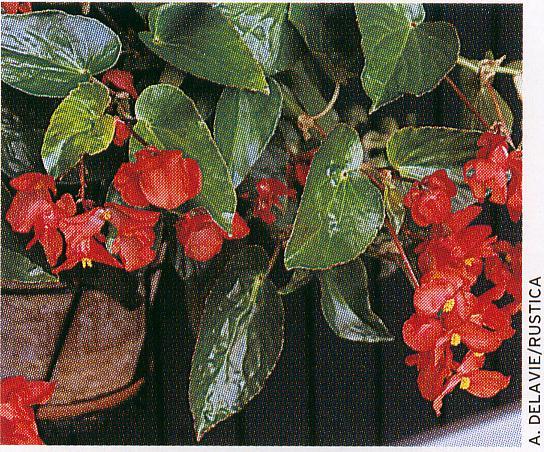Les fleurs du jardin . Scan1010