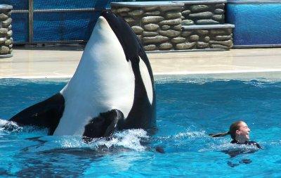[photo] Comparaisons  impressionnantes orques / humains - Page 4 25128010