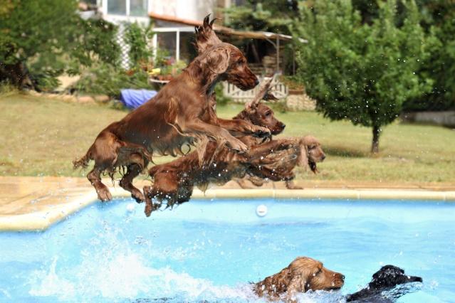 Le chien peut-il se baigner dans une piscine au chlore? Plouf10