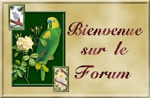 Nos compagons les Perroquets - Portail Cadre_11