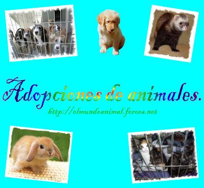 El Mundo Animal - Foro y adopciones de animales - Portal Adopci10