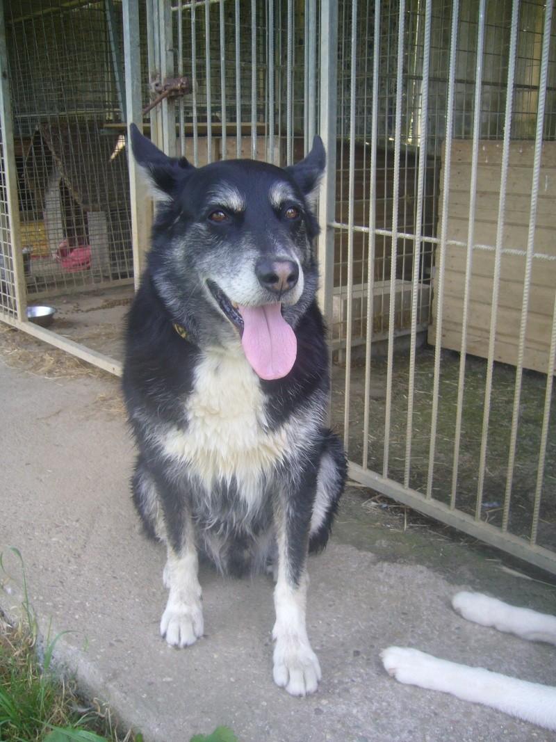 BENJI  male x groendal noir - SPA (54) 10 ans  DECEDE Benji_14