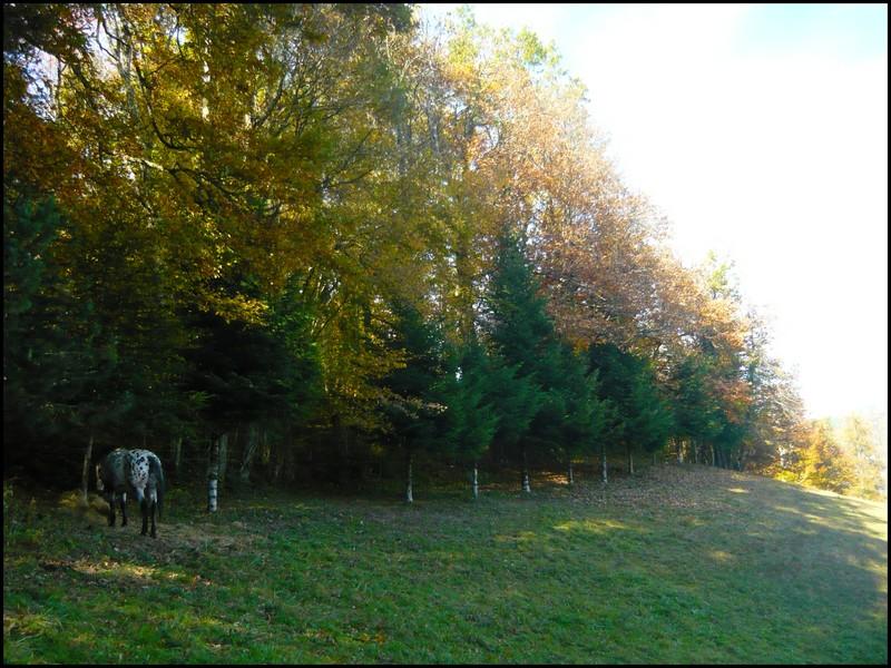 Au couleur de l'automne... Etoile20